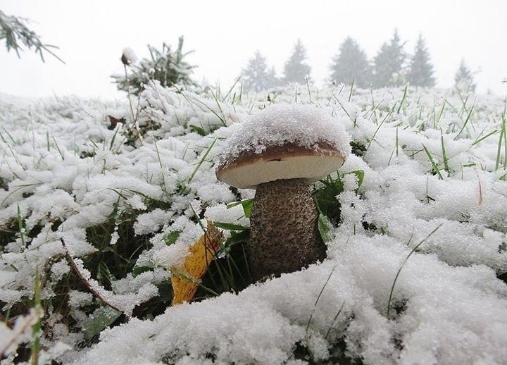 15-сантиметровый слой снега в Карпатах не помешал тихой охоте