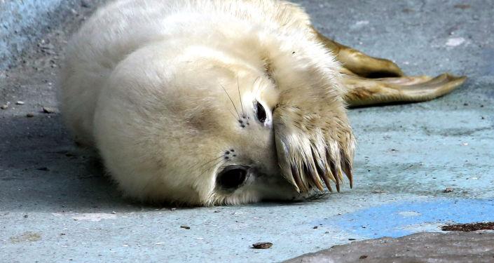 В Латвии рыбакам компенсируют порванные тюленями снасти