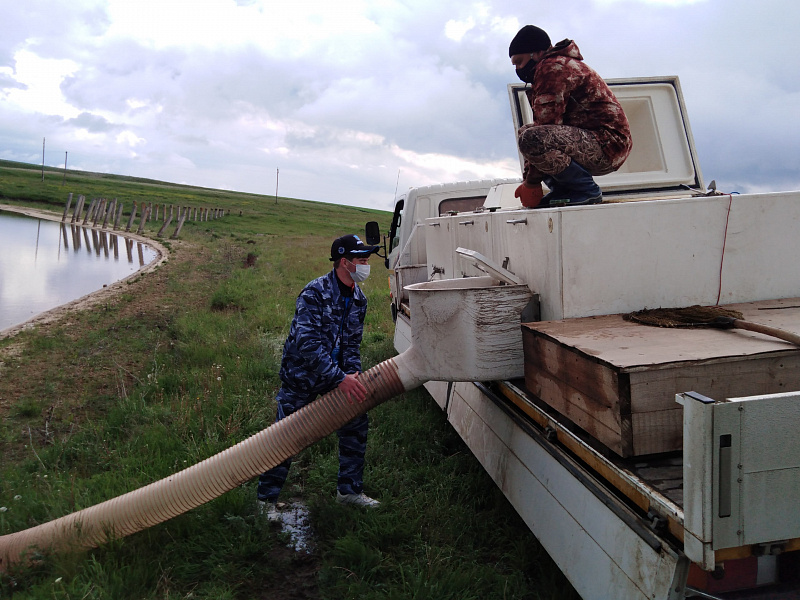 В Волгоградской области добровольцы выпустили в пруд 480 кг мальков