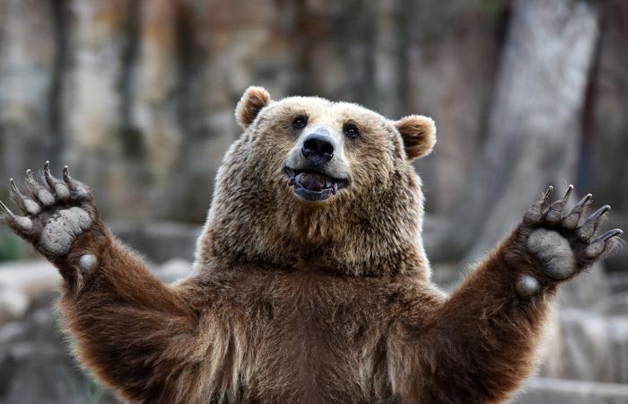 «Медведи чудят»: косолапые испортили машины охотников