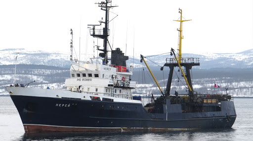 Рыбаки из Абхазии поймали редкую белугу