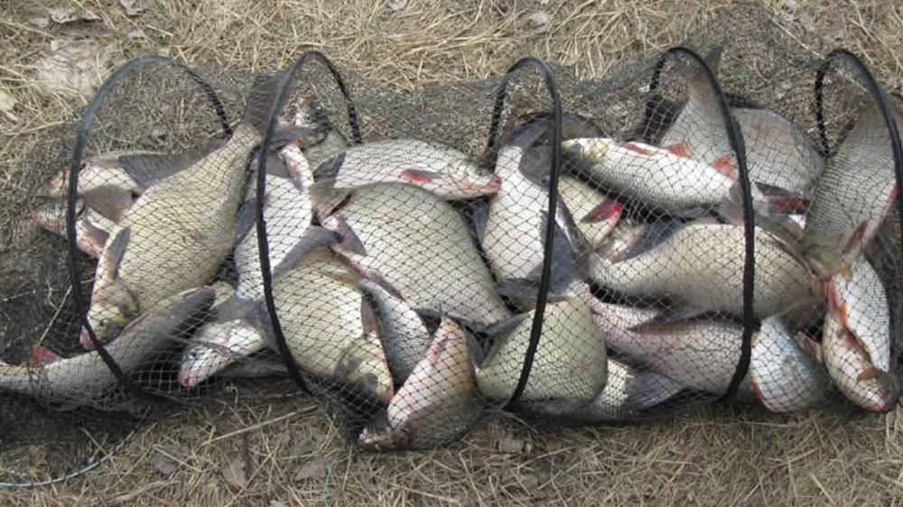 Рыбалка - Преимущества поплавочной оснастки на реке!