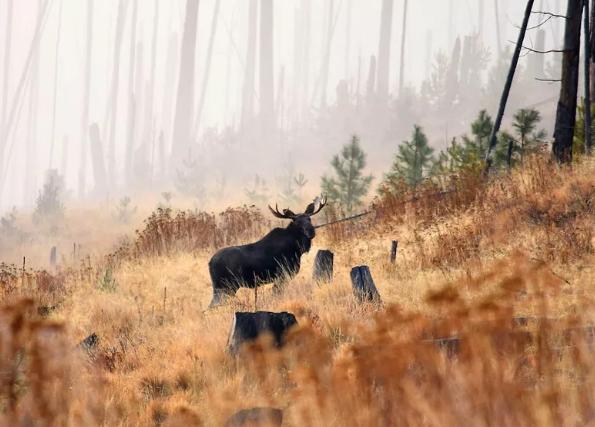 Охота в Омской области отменена не будет!