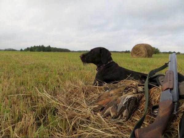 Охота в Тверской области разрешена на дичь