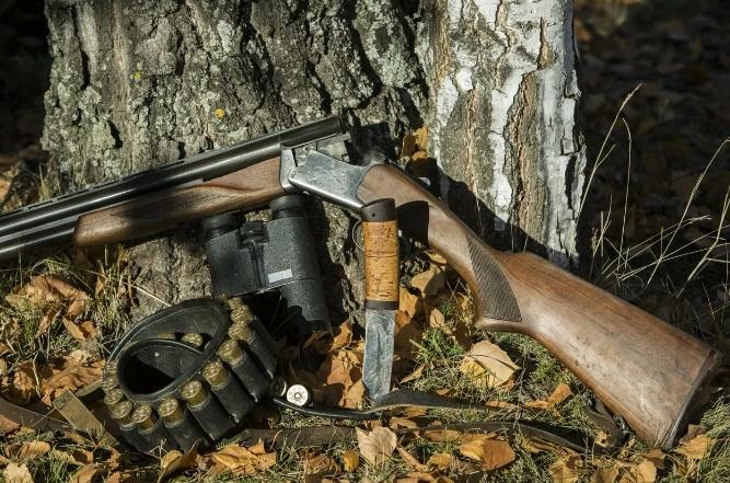 Охотники убили сибирскую косулю незаконным путем
