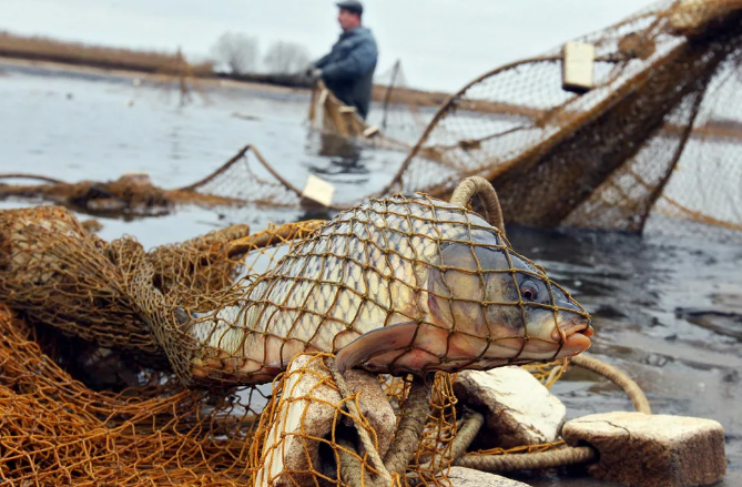 Рыбалка без рыбы или как оказаться в тюрьме на 2 года