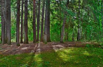 В леса Кургана теперь можно ходить спокойно – запрет уже снят