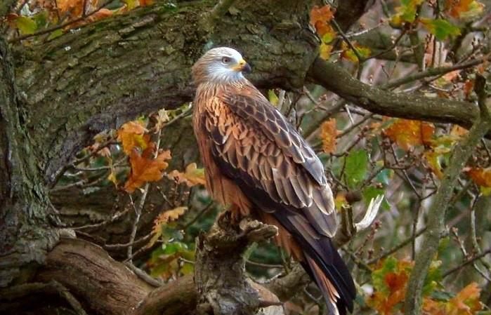 Браконьеры отлавливали птиц из Красной книги в Иркутске