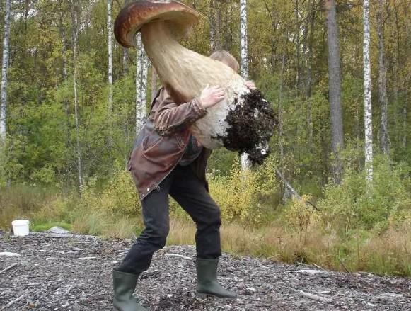 «Гриб на гриб, глаз за глаз» - что же находят грибники в Петербурге
