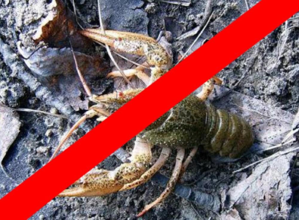 Как не нарушить Закон при ловле раков