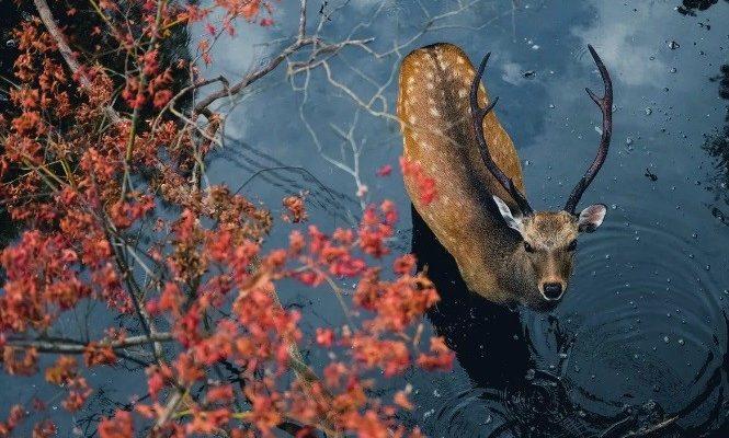 Охота на копытных скоро станет доступной для саратовских охотников