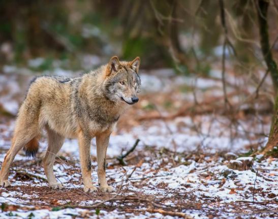 Охота на пушного зверя началась в Нижнем Новгороде