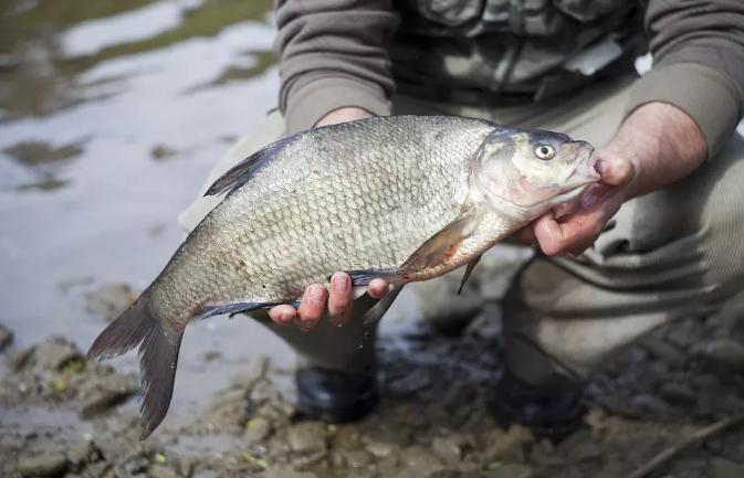 Сентябрьская рыбалка какую рыбу можно поймать и на что лучше ловить