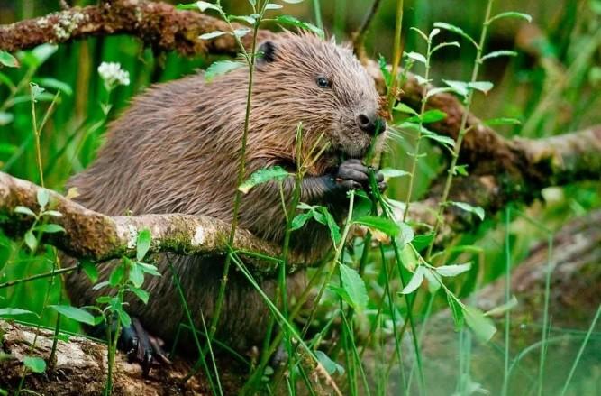 Охота на копытных и бобров началась в Татарстане