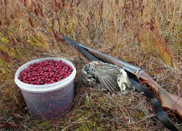 Правила охоты пензенцы нарушают повсеместно