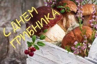 С «Днем грибника» каждого любителя тихой охоты!