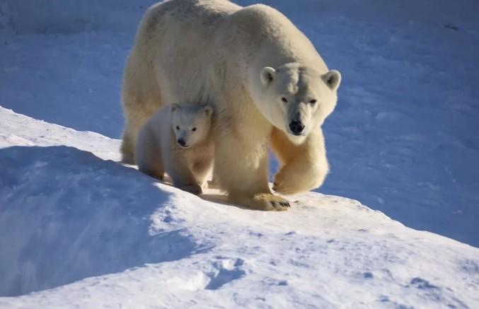 Браконьер убил редкого медведя в Якутии