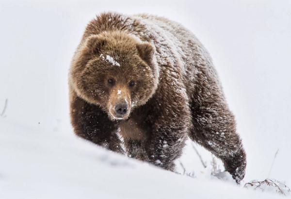 Рыбак думал, что к нему приближается медведь и убил, только не медведя