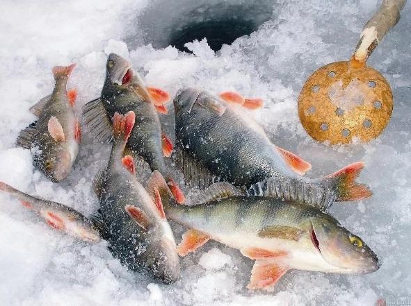 Зимняя кормушка – моя помощница во время рыбалки