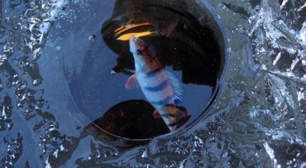 Зимняя рыбалка – рассмотрим основные ошибки рыболовов