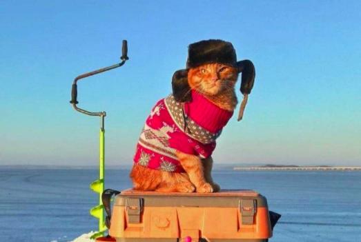 Рыбак Симба ловит рыбу в ушанке. А это, между прочим, кот
