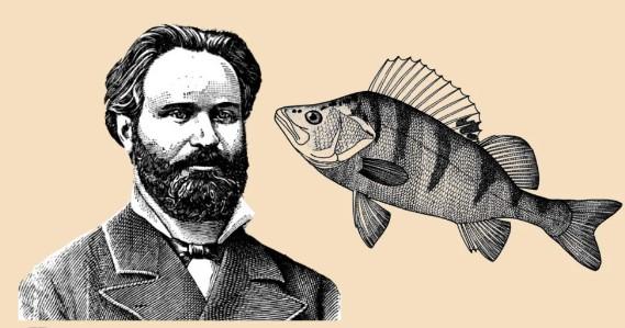 Рыбалка по методу Сабанеева. Ловим окуня зимой
