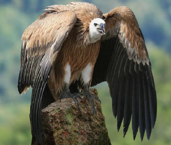 Крымские браконьеры ведут охоту за птицами, причем, за редкими