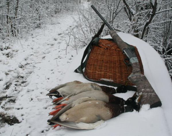 Охота в Томской области пройдет согласно новым срокам