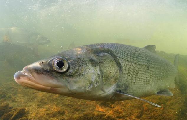 Рыбака могут отправить в колонию за рыбалку