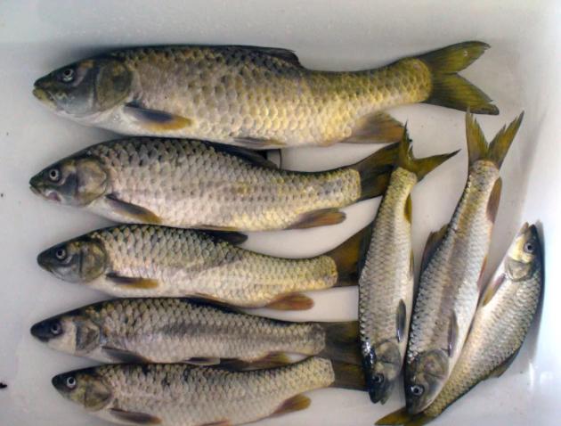 Рыбалка под запретом из-за графской болезни в водоеме