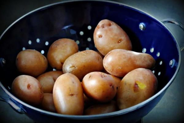 Картофель: больше чем бюджетная насадка на Ваш крючок