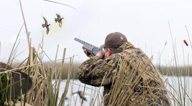 Охота на пернатых уже стартовала во всех районах Брянска