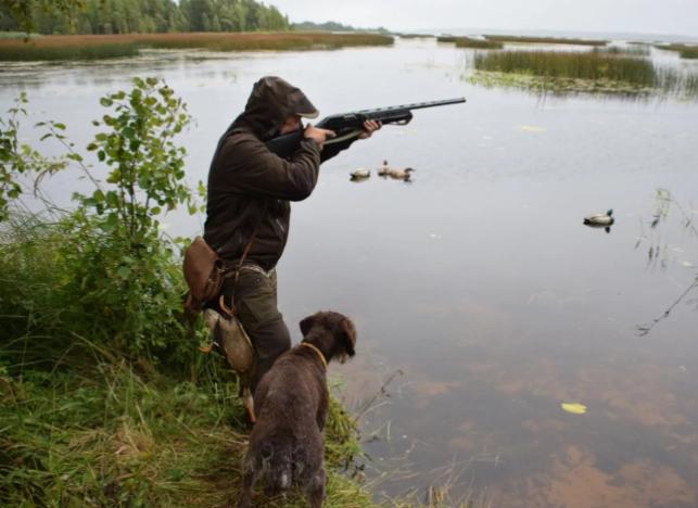 Охота с подсадными утками уже станет доступной в апреле
