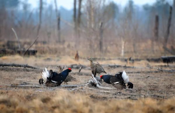 Охота в Тульской области вот-вот откроется