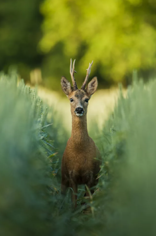 Охотник после охоты сразу же попал в руки правосудия