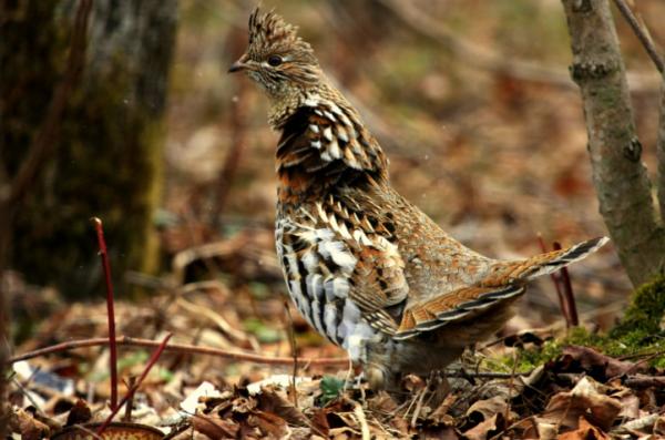 Охотники Орловской области осведомлены в том, как не попасть за решетку