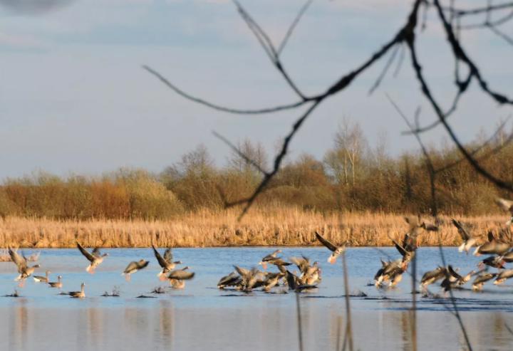 Сезон охоты на пернатых уже скоро начнёте в Белгороде