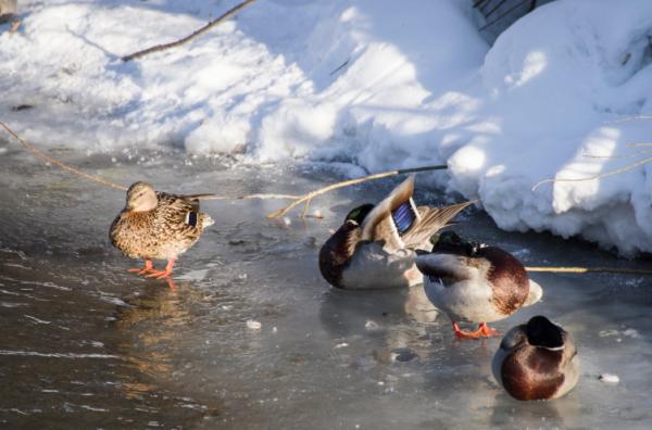 Сезон охоты в Татарстане уже «на носу»