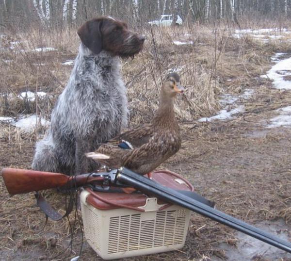 Весенняя охота в Липецкой области стартует с 13 марта