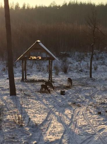 Вести охоту с воздуха в Орловской области теперь запрещено
