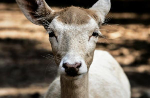 Амурские охотники хотели избежать наказания, спрятав убитое животное в лесу