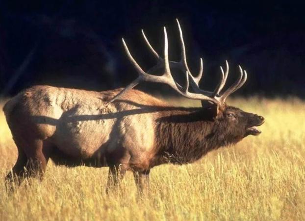 Как оказалось, браконьер – это защитник животных