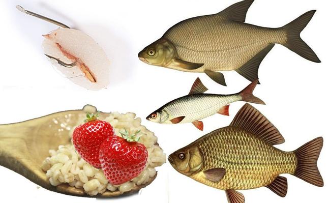 Перловка с клубничкой – лучшая приманка для рыбалки весна – лето