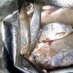 Рыбаки из Астрахани открыли сезон ловли воблы