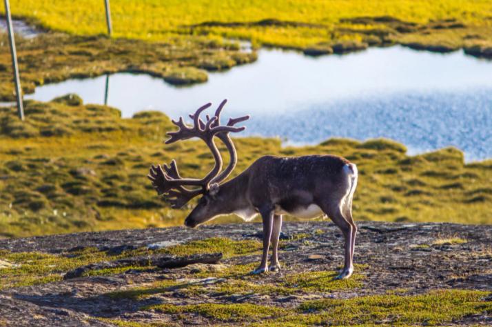 Браконьеры убивают животных на территории заповедников