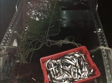 Браконьеры в Ленинградской области ловят рыбу волокушей