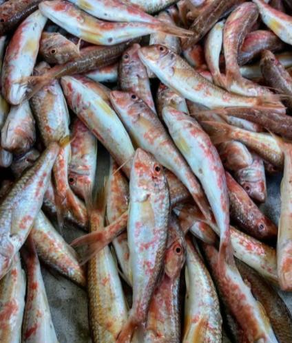 Рыбаки уже начали активный вылов барабули