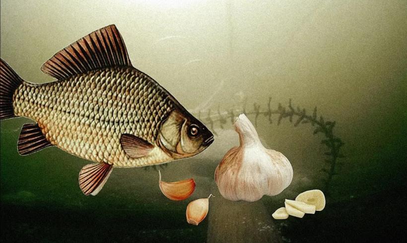 Какая рыба будет активно клевать на чесночные запахи
