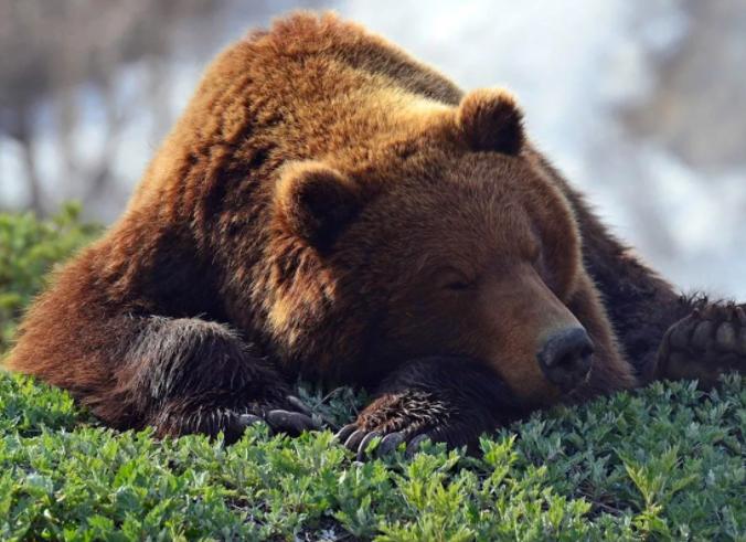 Медведя разыскивают в Мытищах