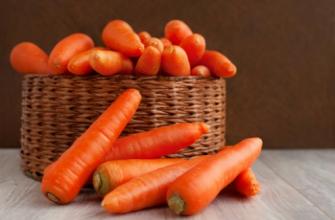 Морковь станет лучшим помощником в карповой ловле